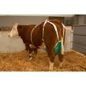 Uiernet koe compleet M