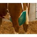 Uiernet koe compleet L