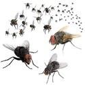 Vliegen en muggen bestrijden