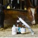 Diergeneesmiddelen voor koeien en kalveren