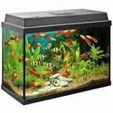 Benodigdheden voor vissen en aquarium