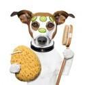 Verzorging Hond
