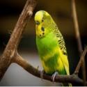 Vogel Verzorging