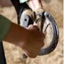 Hoefverzorging paard