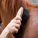 Huid en haar verzorging paard