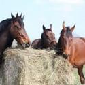 Paardenvoer