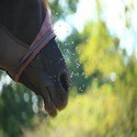 Vliegenbestrijding paarden