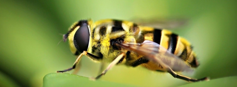 Insecten bestrijding